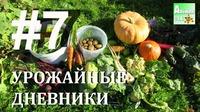День сбора урожая. Видео №7