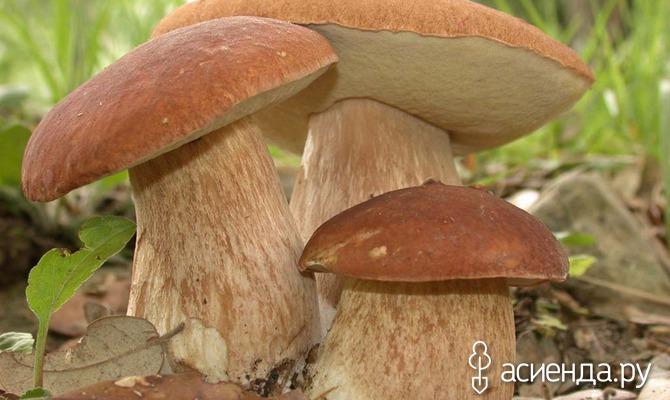 Осенние грибы. Правила сбора