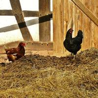 Органические удобрения: основные правила использования