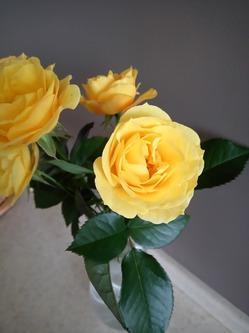 Помогите советом, как правильно пересадить цветы из грунта в горшок?
