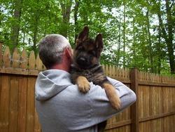 Выбираем собаку для охраны