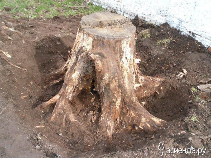 Как выкорчевать дерево своими руками
