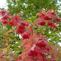 Яркие краски осеннего сада