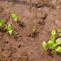 Что вырастить на влажной глине?
