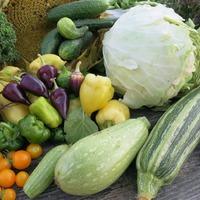 День сбора урожая №8 22 сентября