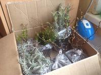 Пришла посылочка с растениями