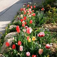 Цветы апреля.