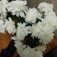 Хризантема из букета