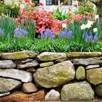 Растения для подпорной стенки из натурального камня