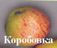 Сорта яблонь в вашем саду