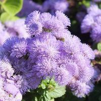 Однолетники в апреле: советы цветоводу