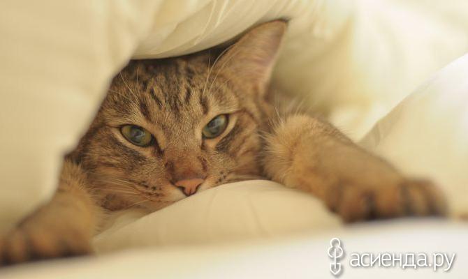 10 причин странного поведения кошки