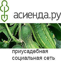 Двойной праздник Асиенда. ру