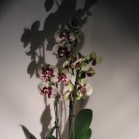 Грибы и орхидея