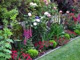 Компаньоны для роз: что посадить рядом с королевой цветов