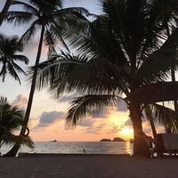 Пальма — символ тропиков и каникул
