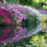 Тенелюбивые цветущие растения