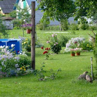 Приглашаю в мой сад. Общие виды. Как было после переезда и стало сейчас.