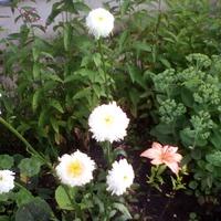 Цветы можно подарить по разному.