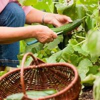 Как в два раза увеличить урожай огурцов
