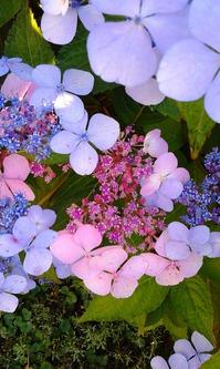 Долгожданное цветение