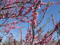 Вспоминая весну