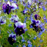 Мои цветы приносят вдохновение
