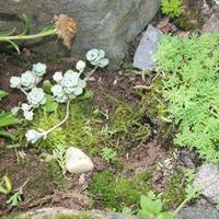 О моем опыте с альпинарием. Посадка растений. Продолжение.