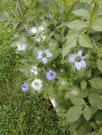 Помогите узнать название цветка, пожалуйста!