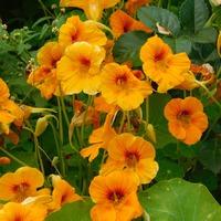 Разгар цветения (часть 2)