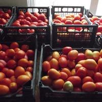 О помидорах, семенах. Готовимся к следующему сезону.