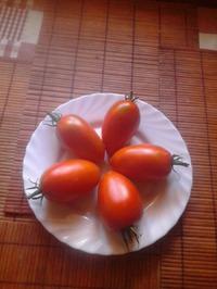 """Сорт помидор """"Красная стрела"""""""