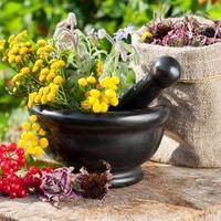 Лекарственные растения в августе-сентябре