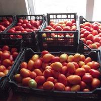 Как быстро и качественно переработать томаты.