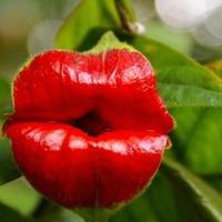 8 любопытных фактов о растениях