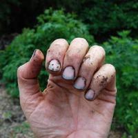 Как отмыть руки после огородных работ?