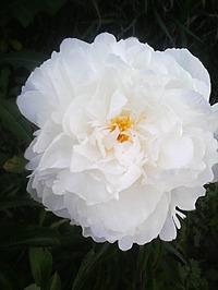 Вдохновение. Мои цветы, мои фото. Inspiration. My flowers, my photos.