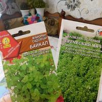 А вы уже посадили зелень?