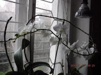 Что нового узнала про орхидеи и для орхидей