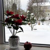 Вот сколько снега и ёлок у меня во дворе! С Новым Годом!