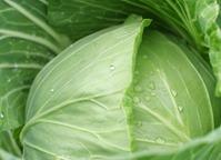 Микроволновка и листья для голубцов