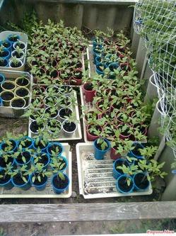 Подготовка почвы для посева семян овощей.