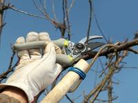 Ошибки, совершаемые при обрезке деревьев и кустарников