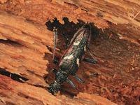 Деревянный дом: защищаем от вредителей