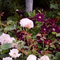 Цветы в моем саду