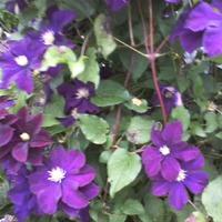 Приглашаю на прогулку в мой летний сад