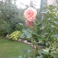 Прогулка в лето продолжается. Цветы на моей даче.
