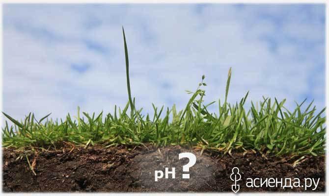 Почва на участке: щелочная или кислая?