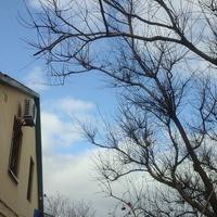 Приближение Весны!!!