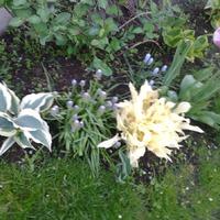 Приглашаю на прогулку в мой летний сад, продолжение